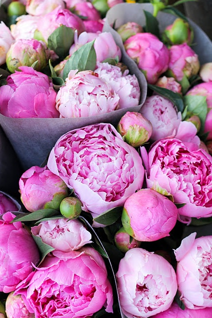 Peonies Season peonies in season | the life scout